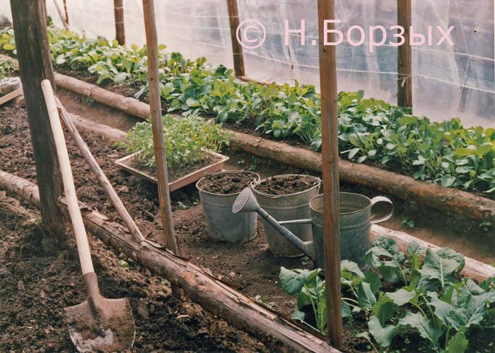Фото клубника в теплице