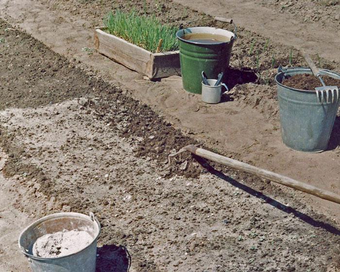 Гиацинты в домашних условиях - как выращивать, уход 97